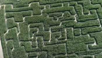 кукурузные лабиринты