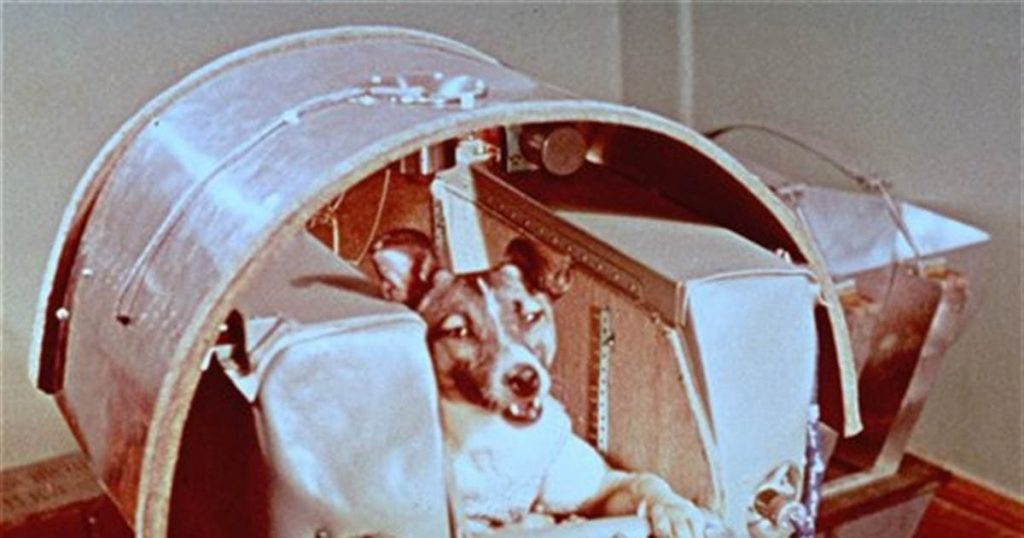 собака в космосе
